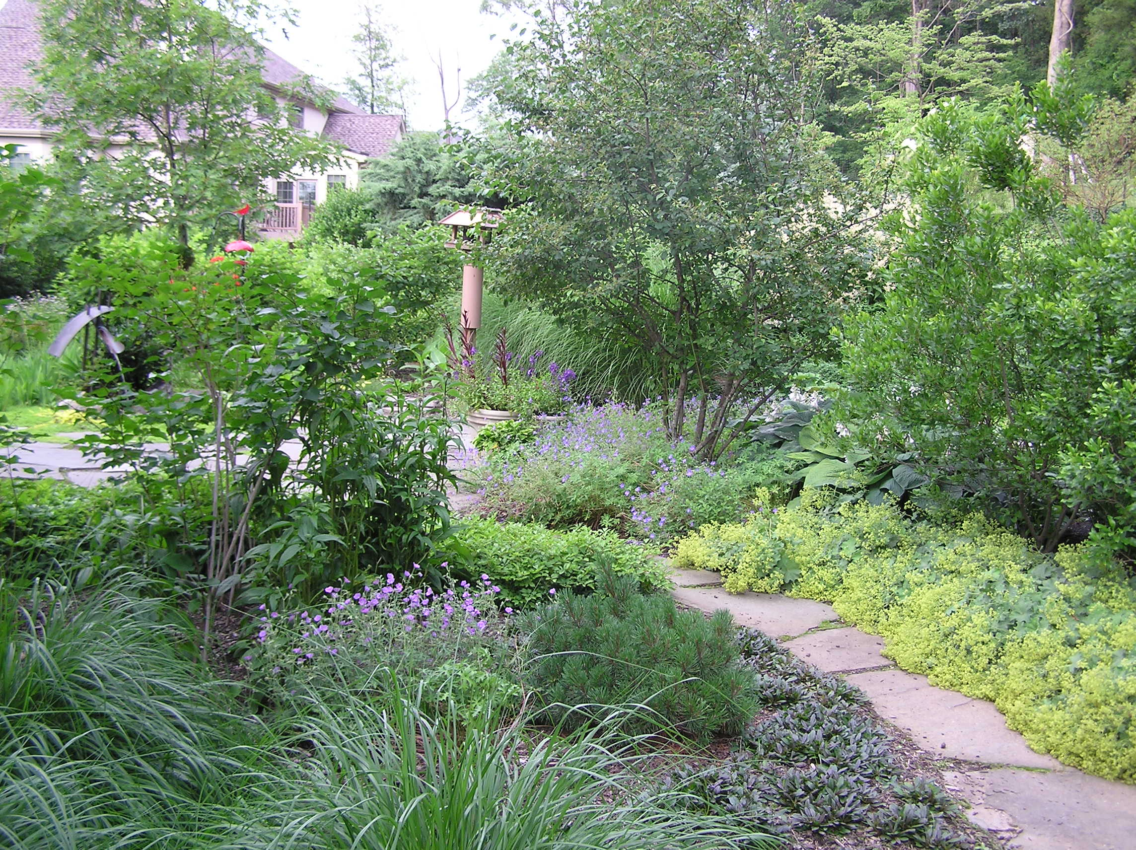 Native plants, bird food, butterfly and hummingbird plants