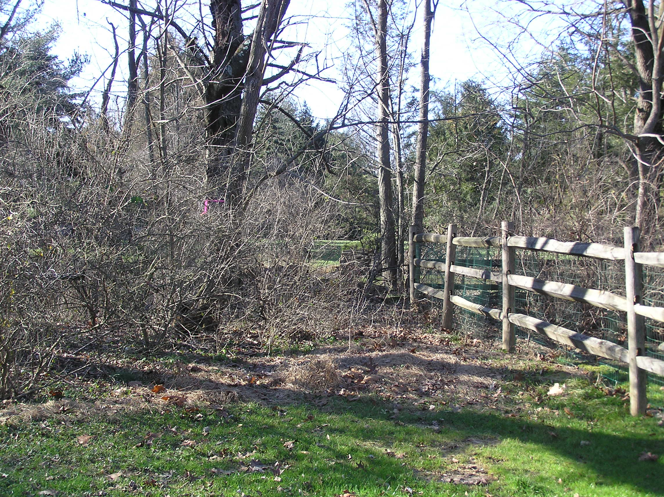 Horticultural Services, proper pruning, Lehigh Valley, PA., Allentown, PA., Bethlehem, PA.  Spring cleanup