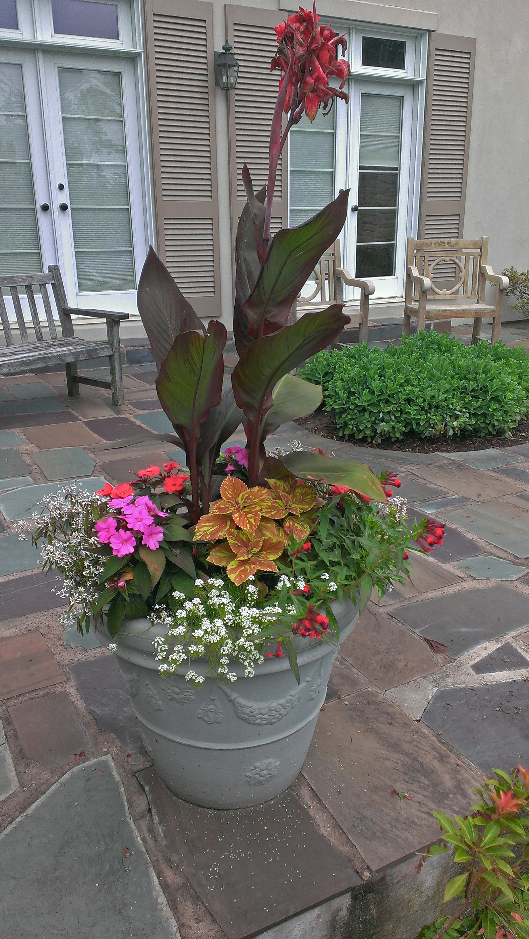 One common form of container design consists of an accent plant surrounded by smaller, less dramatic vegetation.