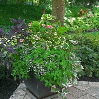 shade container with landscape annuals