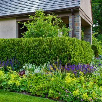 boxwood hedge and perennials