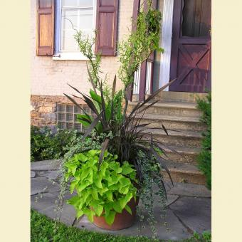 large landscape container