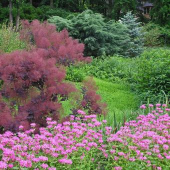 landscape trees and shrubs